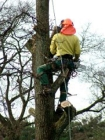 Baumpflegearbeiten mit Seiltechnik